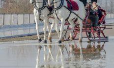 Arrenslee met 2 paarden