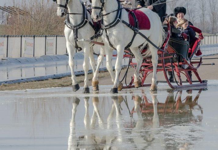 arrenslede bespannen met 2 paarden