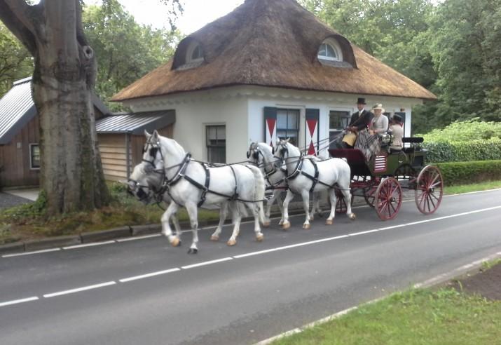 koets met witte paarden