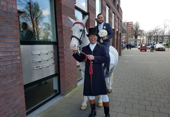 wit paard huren voor bruiloft