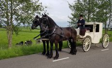 trouwcoupe met 2 Friese paarden
