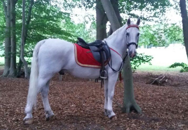 witte paarden huren evenement