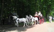 Jacht koets met 4 witte paarden