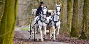 Wilt u de mooiste witte trouwkoets met witte paarden huren