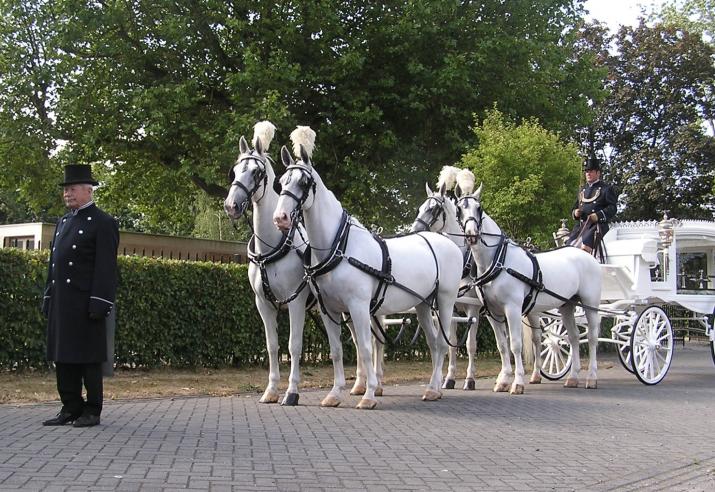 witte rouwkoets met witte paarden